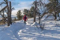 L'hiver augmentant dans le Colorado Image stock