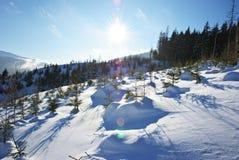 l'hiver avant du soleil d'appareil-photo Photo libre de droits