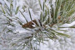 L'hiver beau Photos libres de droits