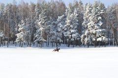 L'hiver beau Photographie stock libre de droits