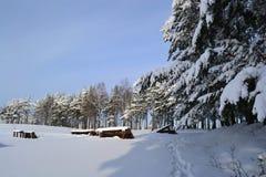 L'hiver beau Photographie stock