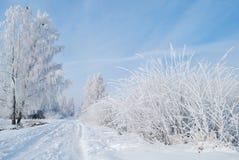 L'hiver blanc Images libres de droits