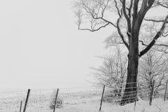 L'hiver blanc Image libre de droits