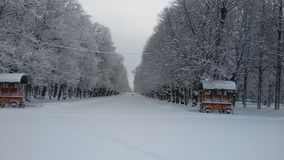 L'hiver blanc Photo libre de droits
