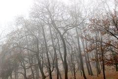 L'hiver brumeux Photo libre de droits