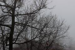L'hiver brumeux Photos stock