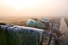 l'hiver brumeux d'horizontal de prairie de jour Images libres de droits