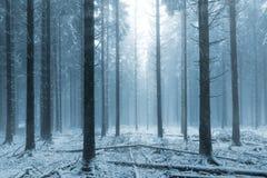 l'hiver brumeux de forêt Photo stock