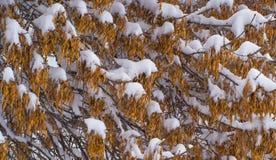 L'hiver Chutes de neige dans la ville Photo stock