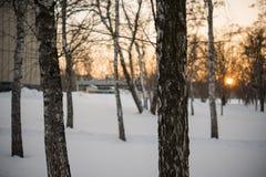L'hiver Coucher du soleil neige bouleaux Images stock