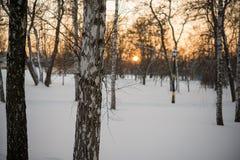 L'hiver Coucher du soleil neige bouleaux Photographie stock