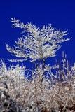 l'hiver couvert d'arbre de neige photographie stock libre de droits
