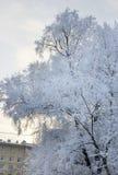 l'hiver couvert d'arbre de neige Branches couvertes par le gel blanc Images stock