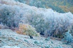 l'hiver couvert d'arbre de paysage de gel Photographie stock libre de droits