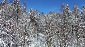 l'hiver couvert d'arbres de neige banque de vidéos