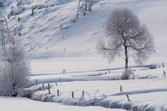 l'hiver d'arbre images stock