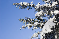 l'hiver d'arbre Photos stock