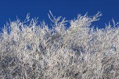 l'hiver d'arbres Photographie stock libre de droits