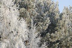 l'hiver d'arbres Images stock