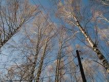 l'hiver d'arbres Image libre de droits