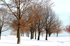 l'hiver d'arbres Photo stock