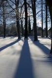 l'hiver d'arbres Photos libres de droits
