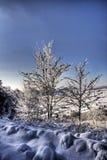 l'hiver d'arbres d'horizontal Photographie stock