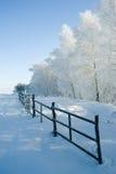 l'hiver d'arbres d'horizontal Photos stock