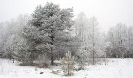 l'hiver d'arbres de fond Photographie stock libre de droits