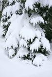 l'hiver d'arbres de neige de saison image stock