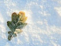 L'hiver d'automne Photo libre de droits