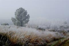 l'hiver d'horizontal image libre de droits