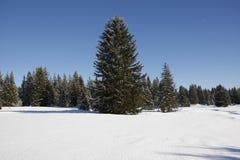 l'hiver d'horizontal Image stock