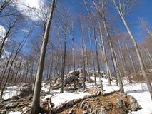 L'hiver dans la forêt Photographie stock
