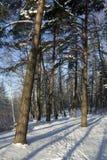 L'hiver dans la forêt, longues obscurités Image libre de droits