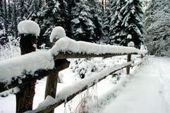 L'hiver dans le bois Photographie stock libre de droits