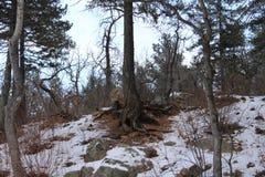 L'hiver dans le Colorado Image libre de droits