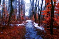 L'hiver dans le Wisconsin Photographie stock