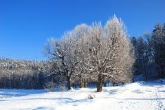 L'hiver dans les bois Image stock
