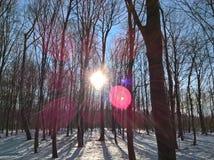 L'hiver dans les bois Photographie stock