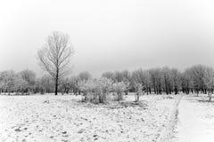 l'hiver de chemin image stock