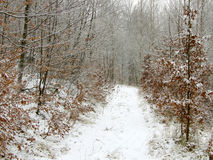 l'hiver de chemin photo stock