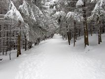 l'hiver de chemin images libres de droits