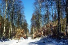 L'hiver de chemin forestier Images libres de droits