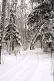 l'hiver de chemin forestier photographie stock libre de droits