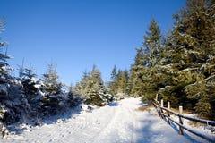 l'hiver de chemin forestier Image libre de droits