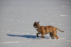 L'hiver de chien dehors neigent lac image stock