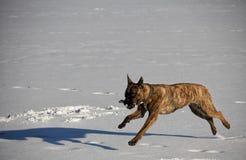 L'hiver de chien dehors neigent lac images stock