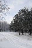 l'hiver de conte Photo libre de droits