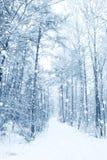l'hiver de conte de fées images libres de droits